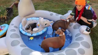 Throwing a Dog A Pool Party