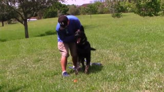 Train your dog to bark on your command