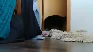 Cat play hide-and-seek with owner's camera