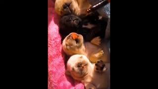 Cute dog - feeding the little puppies