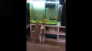 Cute and Funny Animals Video Compilation 2