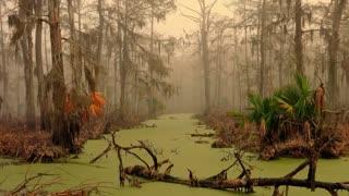 Swamp Song - original work