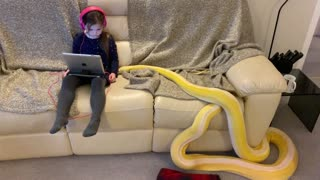 Little Girl and Python Lounge on Couch