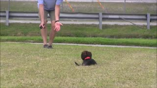 Dog Training... Video