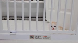 A Funny Little Kitten Don't Want Living Lonely