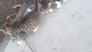 New beautiful adoreable 😻x3 kittys members of the cat family