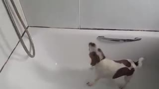 Dog Hilariously Tries To Eat Running Shower Water