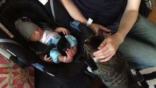 CATS MEETING BABIES FOR THE FIRST TIME. REACTION.