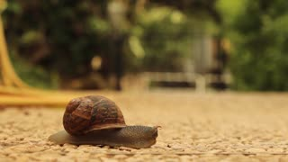 Snail crossing the Road