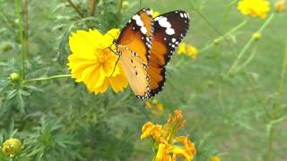 Beautiful Butterfly shot