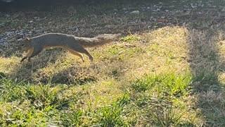 Hello Sammy Squirrel