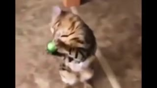 Cute cat playing with a christmas ball