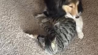 Sweet doggy and kitty playtime will brighten your day