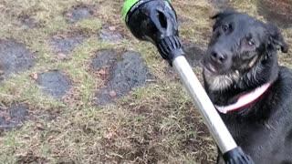 Thirst dog