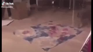 Funny cat video omg😂😂😂😂