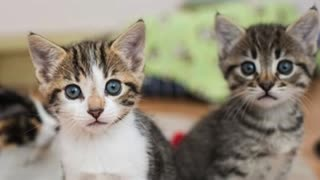 Cute Cats for you