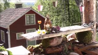 squirrel photo workshop