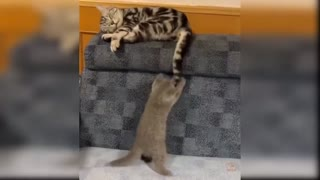 funny cats Change your Minds