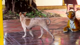 Fake tiger prank with dog and monkey