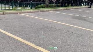 Police Response to Minneapolis Riots