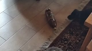 Puppy playing with bottle