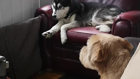 Lazy day with the dogs
