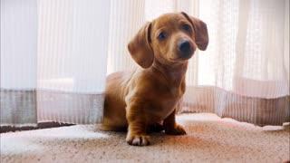 Little puppy   Cute puppy of dog
