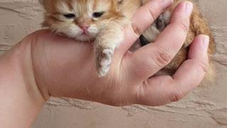 Beauty Procedures for a Precious Kitten