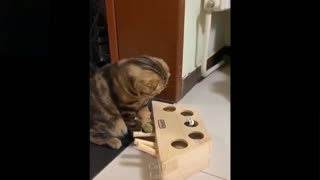 Very confused cat