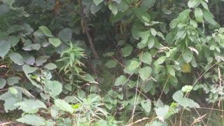 a winter wren stops to say hello