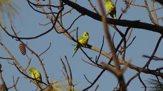Parrots live in groups in the wild