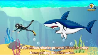 How to survive a shark attack travelsquare