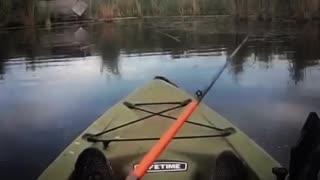 Largemouth Bass on top water.