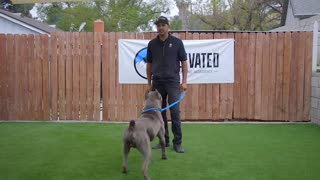 DOG TRAINING FUNDAMENTALS:LESSON 1