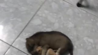 Sleepy Puppy Hugs Hamster Best Friend