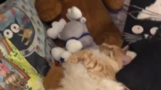 Cute cat has very scared look