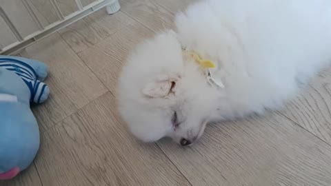 Sleeping puppy !