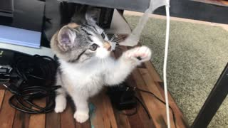 Cute cat playing and playing