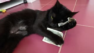 Money-hungry kittens steal one dollar bills