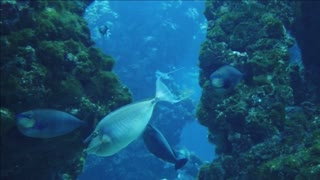 AMAZING FISH OCEAN