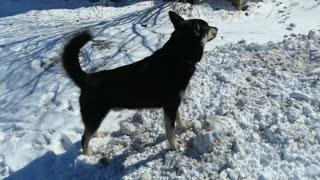 A beautiful dog is enjoying the outdoors.
