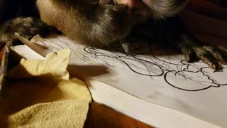 Artistic monkey enjoys drawing in coloring book
