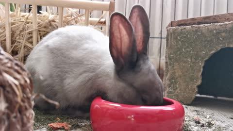 Beautiful hungry Rabbit,