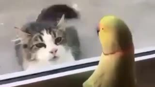 A cat playing with parrot