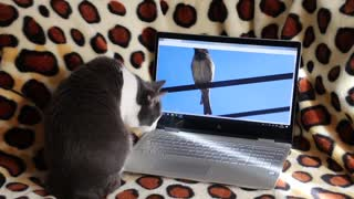 That cat trying to catch that bird