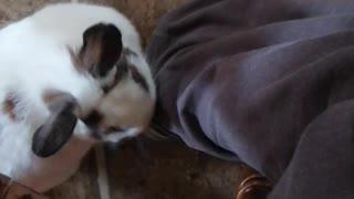 Chuck Bunny...7