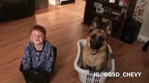 Little boy crashes dog's training session