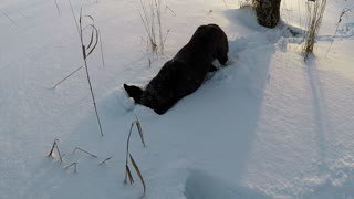 Rescue dog's heartwarming reaction to her first snowfall