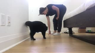 How To Train Your Cat: Beginners Start Here