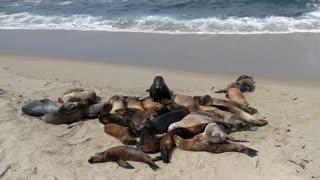 Seals and Sea lions - San Diego, California